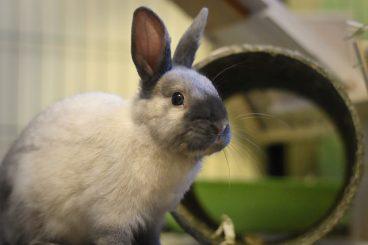 educar a un conejo es posible