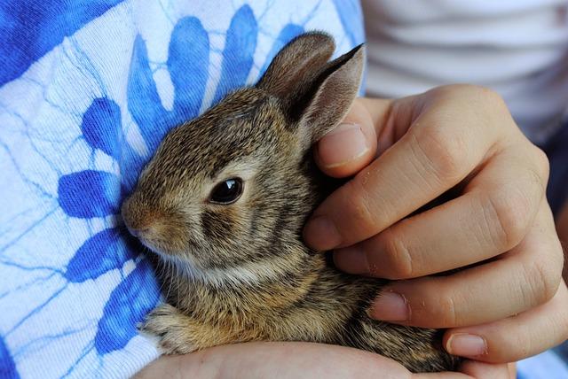 educar a un conejo para que no muerda