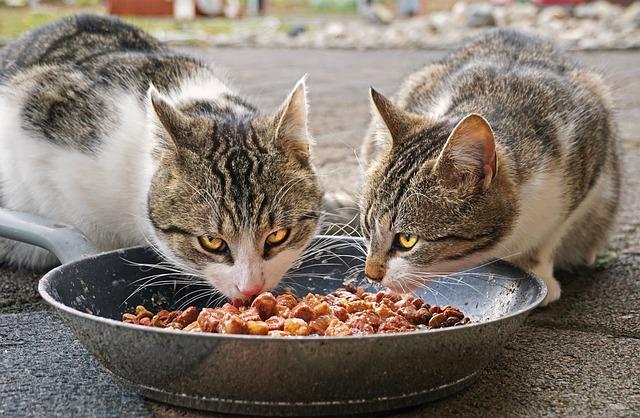 importancia de la taurina en gatos
