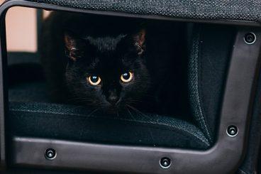 la ansiedad en gatos