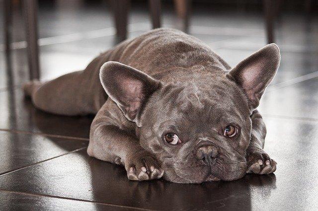 Los productos químicos pueden intoxicar a las mascotas