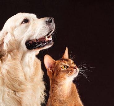 miedos que comparten perros y gatos