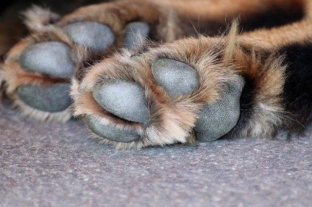 no hay que usar productos químicos para limpiar las patas de las mascotas