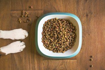 por qué mi perro tira su comida fuera del plato