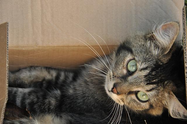 Razones de por qué a mi gato le gustan las cajas