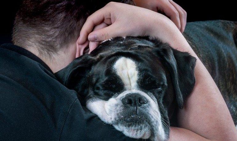 Síndrome de williams-beuren en perros y su cariño