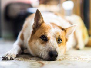 síntomas del estreñimiento en perros