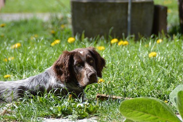 síntomas del estreñimiento en perros cómo detectarlo