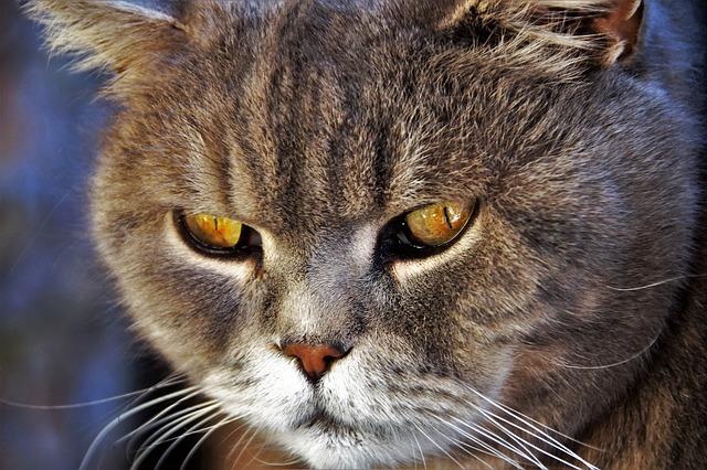 tratamiento para la ansiedad en gatos