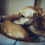 ácaros en perros