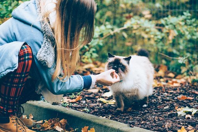 adoptar a un gato de la calle