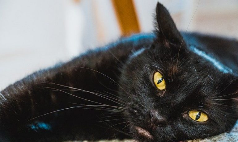 alzheimer en gatos
