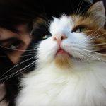 cómo adoptar a un gato