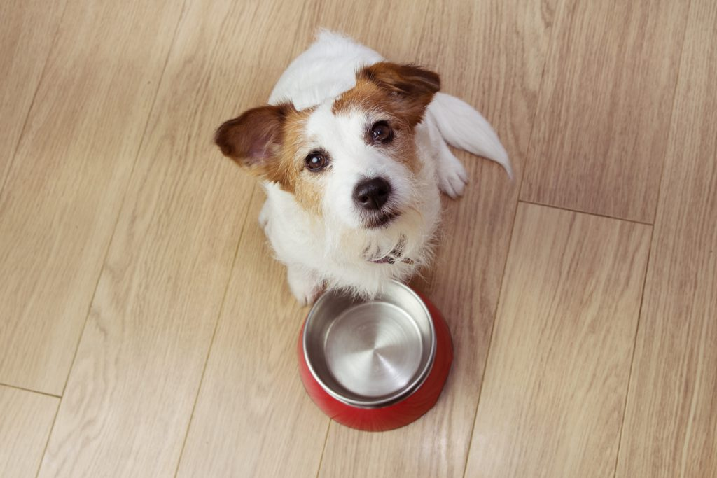 cómo se consigue la palatabilidad en la comida de los perros