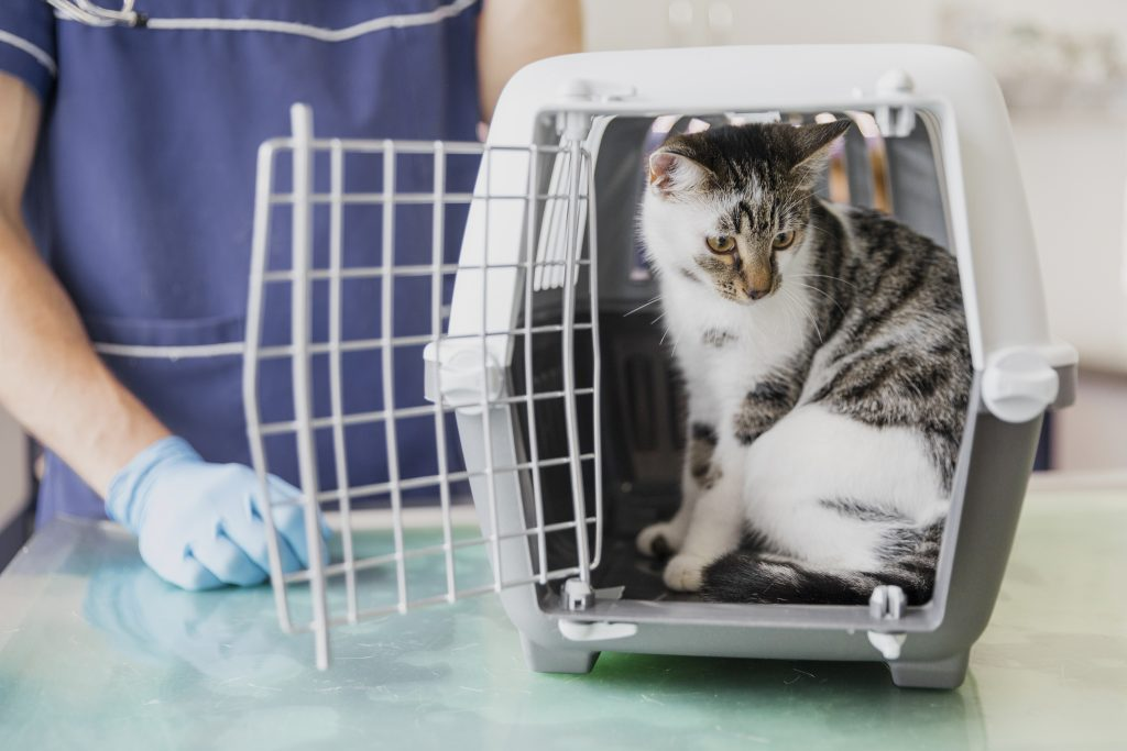 Cosas a evitar con el transportín de tu mascota