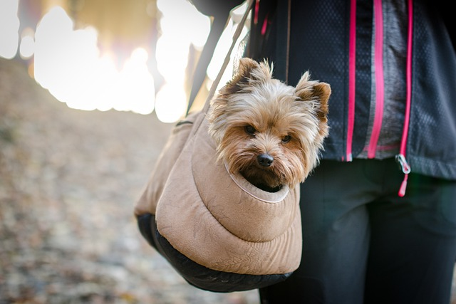 el transportín de tu mascota debe ser sujetado correctamente
