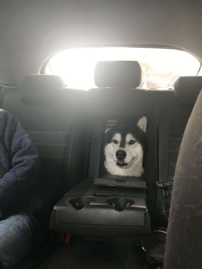 Fotos graciosas de perros dentro del coche