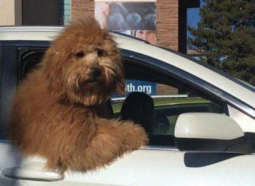 fotos perros coche