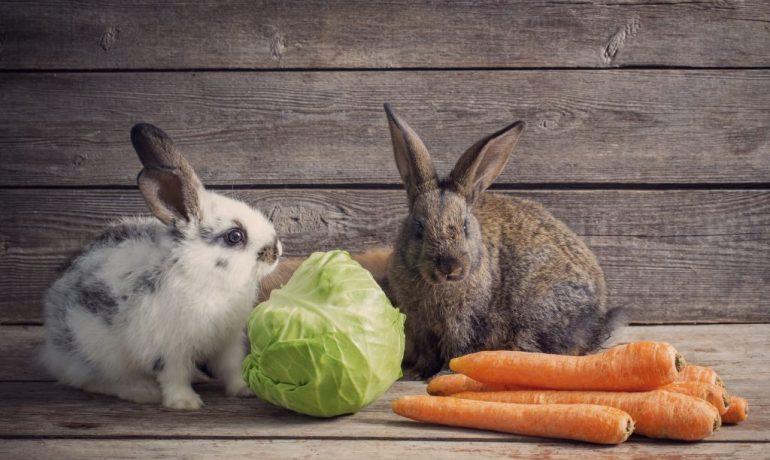frutas y verduras para conejos
