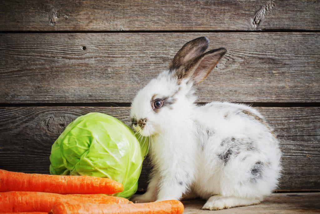 frutas y verduras para conejos más indicadas