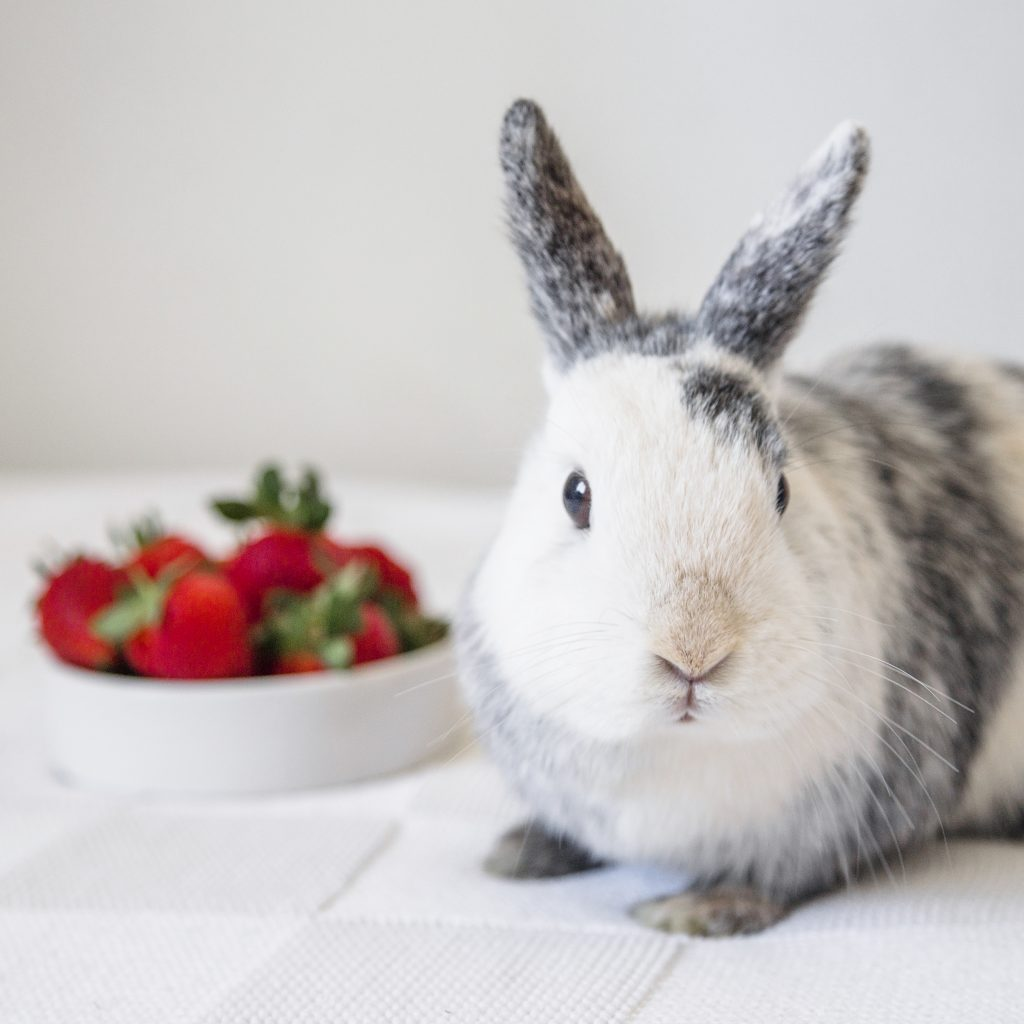 frutas y verduras para conejos saludables