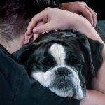 La importancia del contacto físico con tu perro
