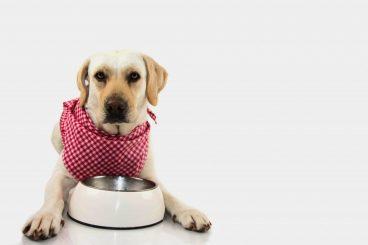 La palatabilidad en la comida de los perros