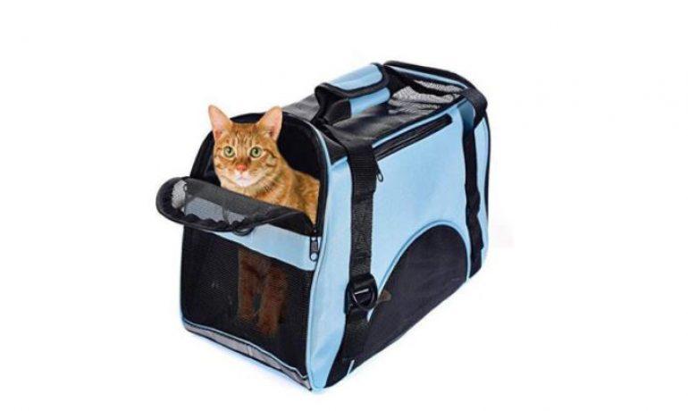 lo que no debes hacer con el transportín de tu mascota