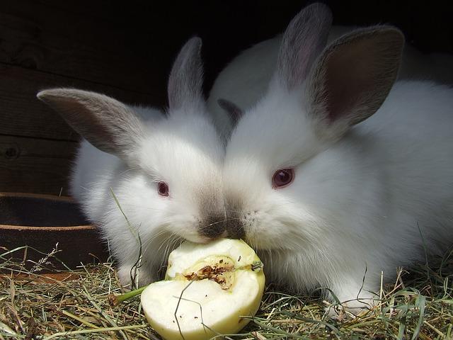 los conejos pueden comer plátano o es malo para ellos
