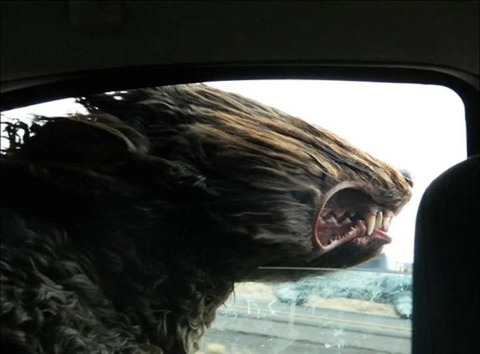 perro en coche con pelo al viento