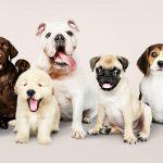 por qué hay tantas razas de perros diferentes