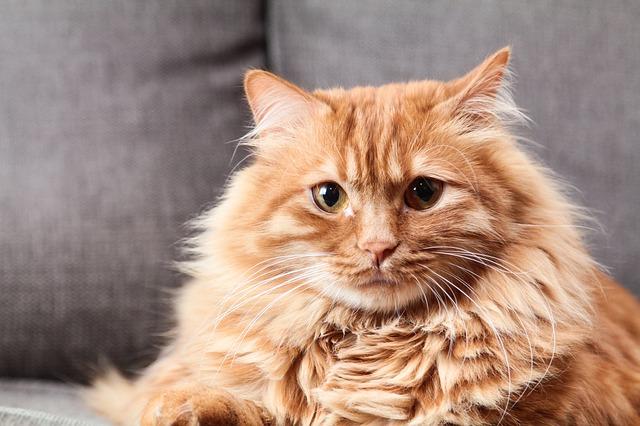 síntomas del alzheimer en gatos