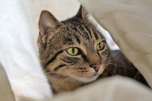 tips para ayudar a un gato con alzheimer