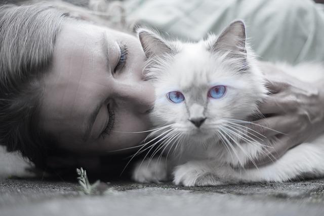 todo sobre cómo adoptar a un gato