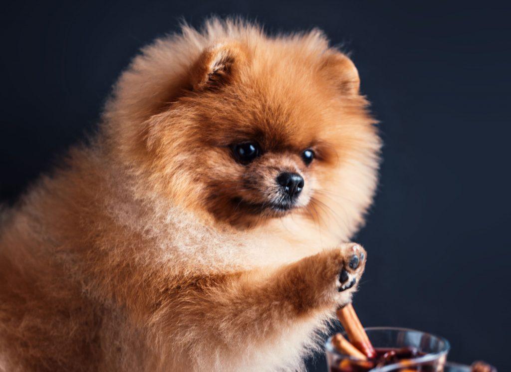 usos de la canela en perros