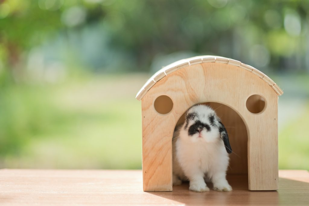 antes de tener un conejo considera el espacio
