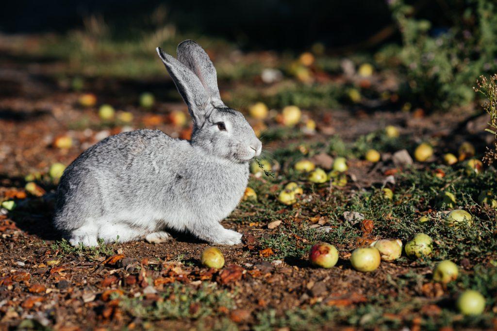 antes de tener un conejo debes saber que requieren tiempo
