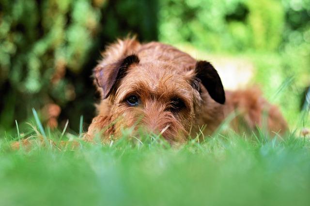 causas del síndrome de pica en perros