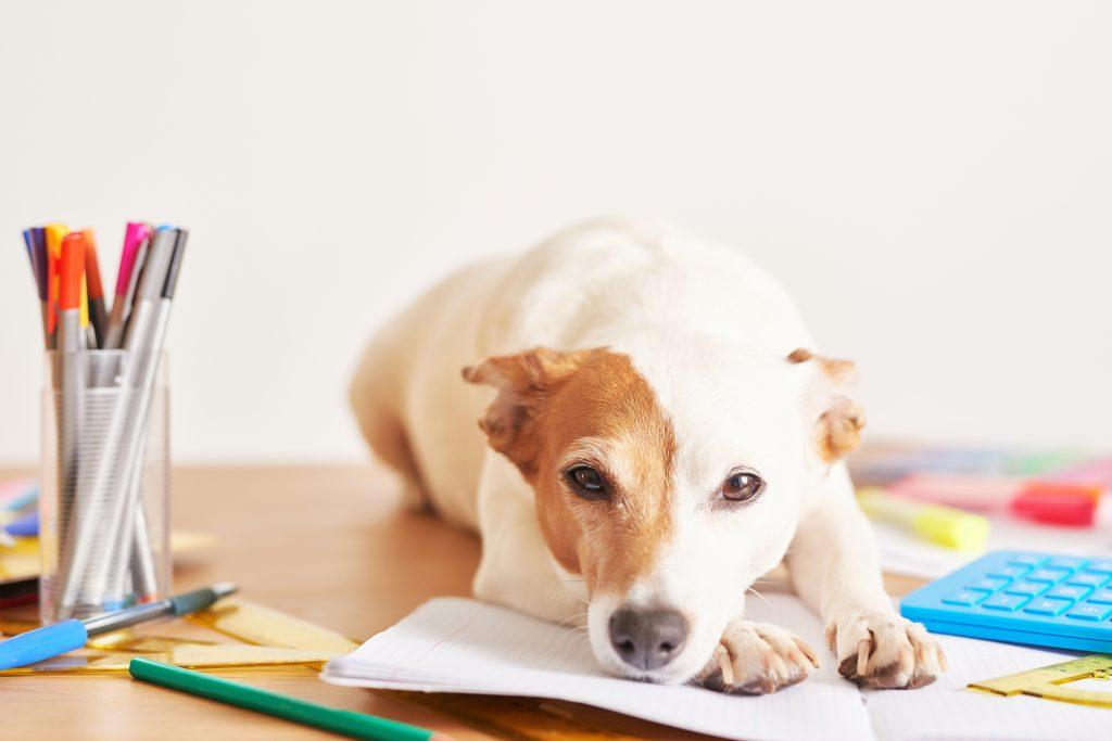 causas por las que mi perro come papel