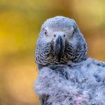 Cinco loros son retirados de un zoo por insultar