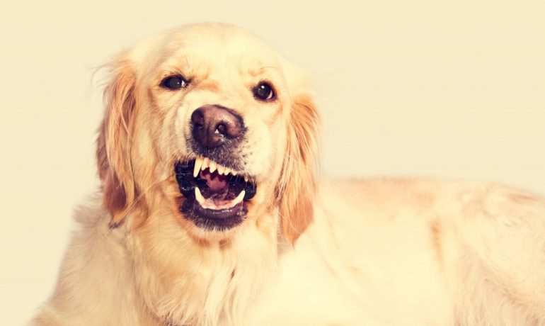 cinofobia o fobia a los perros