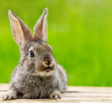 consejos a tener en cuenta antes de tener un conejo