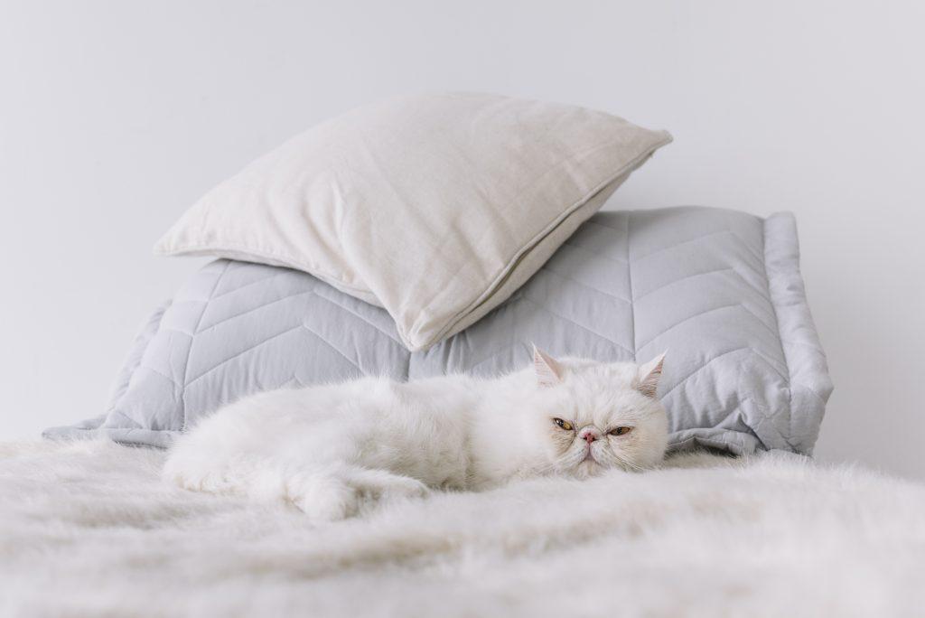 consejos si tu mascota va a dormir contigo