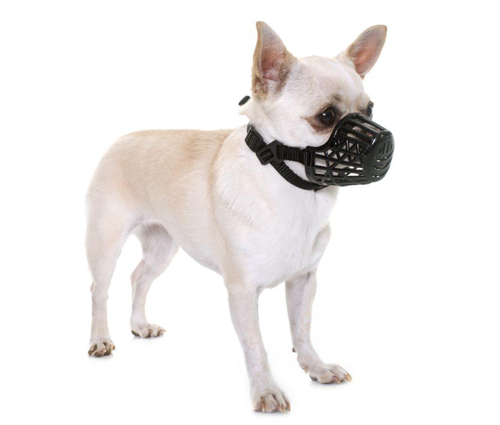 consejos sobre cómo poner un bozal a un perro