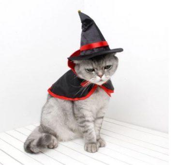 disfraces halloween gatos