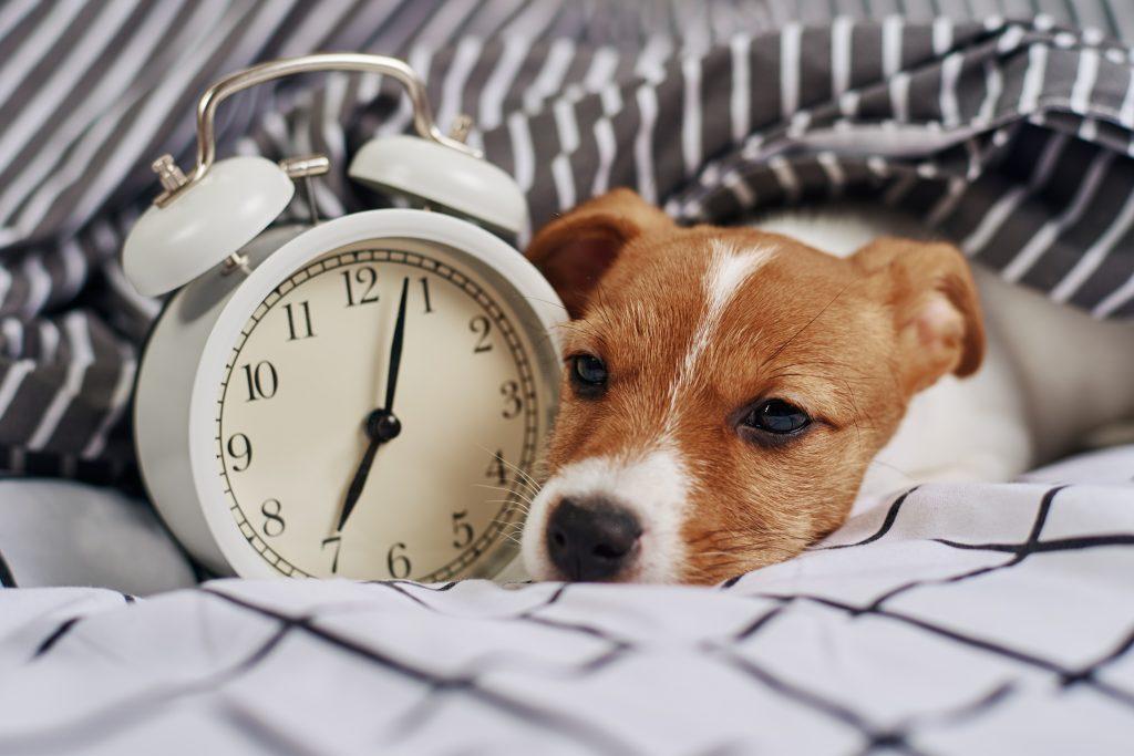 dormir con tu mascota puede afectar a la calidad del sueño