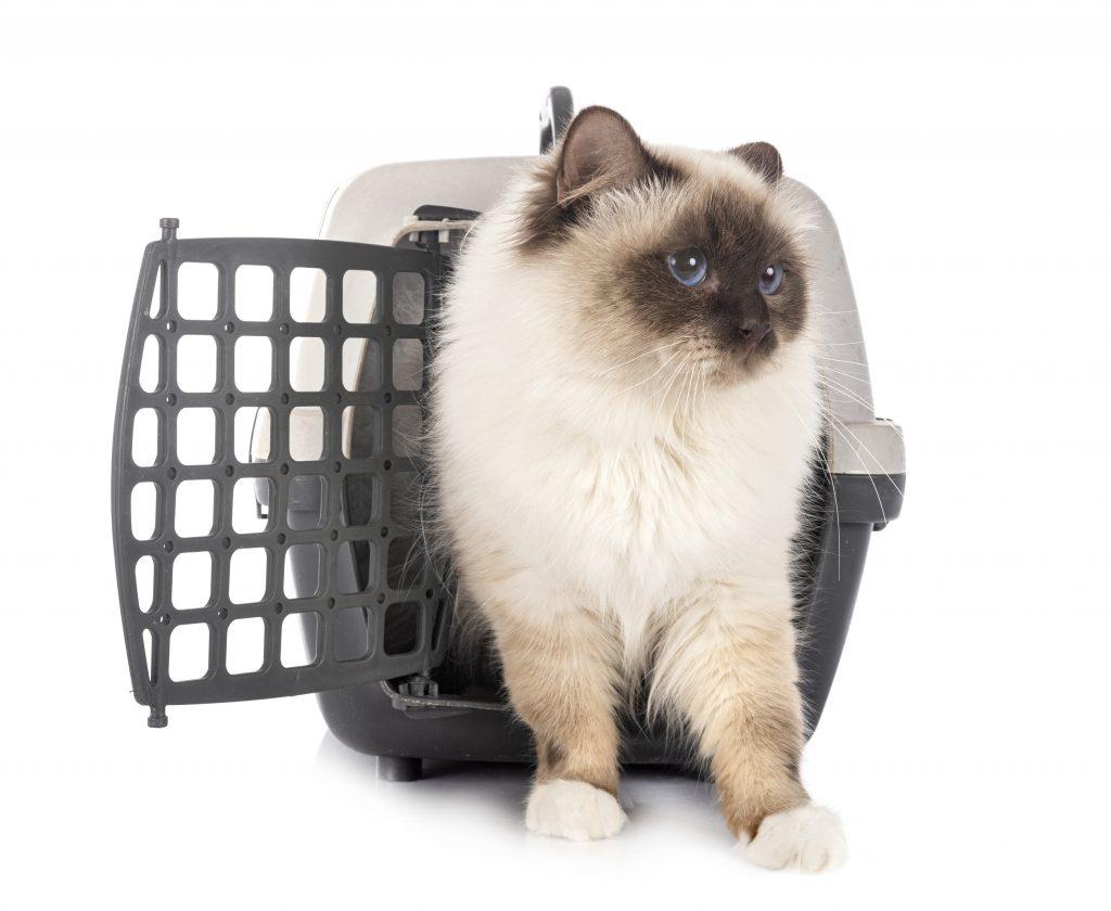 gato dentro del transportín