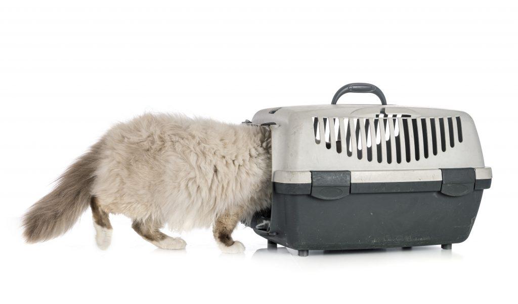 introduce comida dentro para acostumbrar al gato al transportín