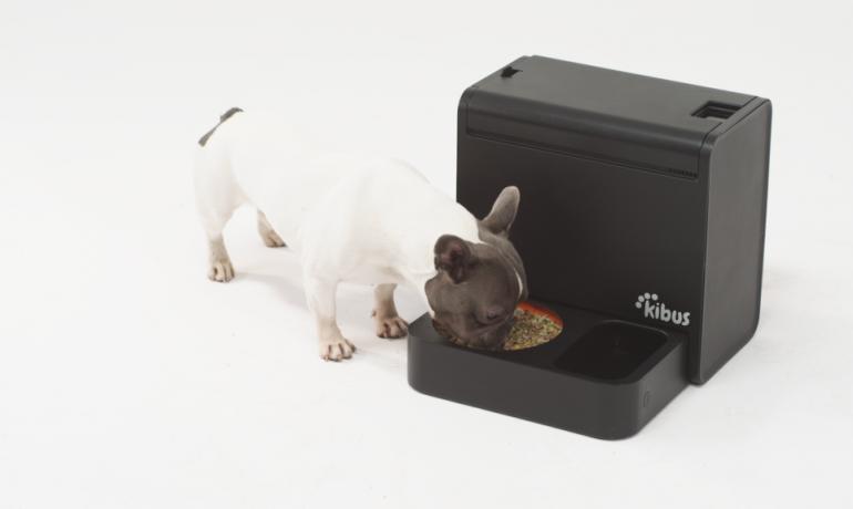 Kibus dispositivo automático de alimentación canina