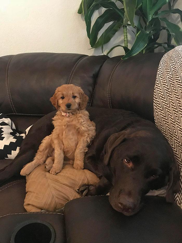 mejores reacciones de perros a sus hermanos pequeños
